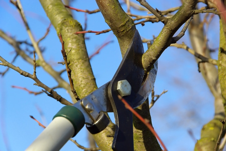 Featured Image For Hard Pruning is Essential for Your Landscape